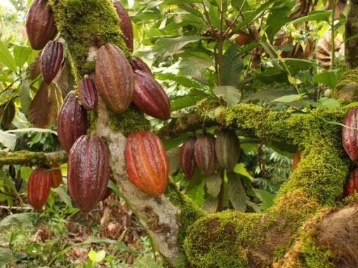 private-group-tour-of-the-dominican-cacao-route-in-punta-cana-485133