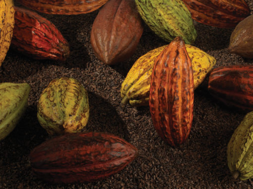 Cacao from Exterior Book presented by VICINI | Cacao del exterior del libro presentado por VICINI